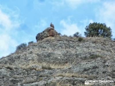 Hoces del Río Duratón - Sepúlveda;club senderista viajes alternativos ruta por carretera